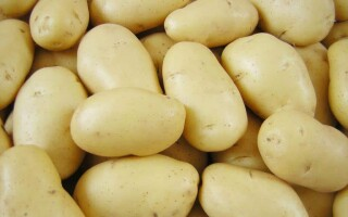 Картопля сорокодневка