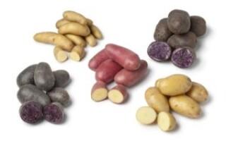 Картопля елітних сортів відгуки