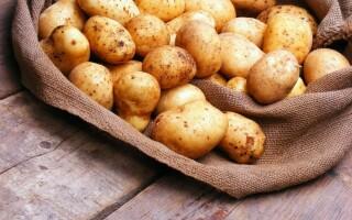Чи можна кішці картопля