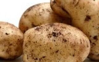 Картопля смажена калорійність