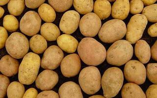 малюнок картоплі