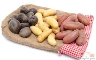 Ельмундо картопля характеристика