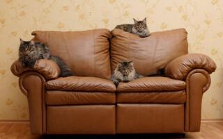кіт ухопив диван з тканини як відремонтувати
