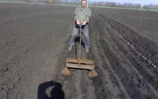 Підгортання картоплі мінітракторів