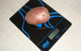 Скільки важить картопля