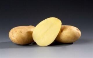 Картопля рамос опис сорту
