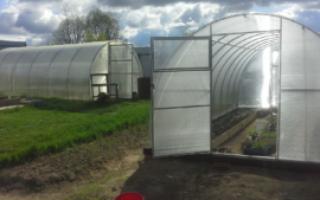 Як зробити грядки в теплиці 3х6 для помідорів і огірків