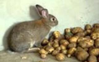 Чи можна давати кроликам варену картоплю