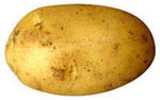 Бульба картоплі і цибулина тюльпана конвергенція