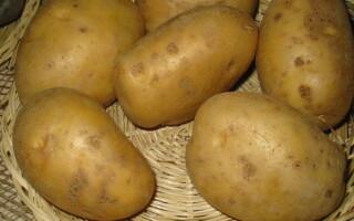 Картопля янка