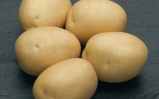 Картопля сорт наташа
