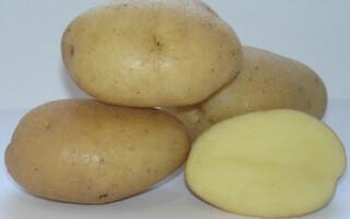 Картопля вимпел