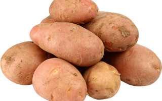 червоний картопля