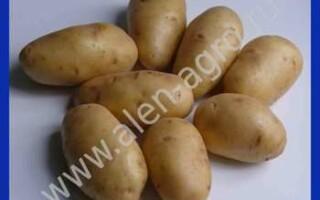 Картопля импала відгуки
