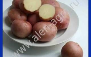 Картопля розанця