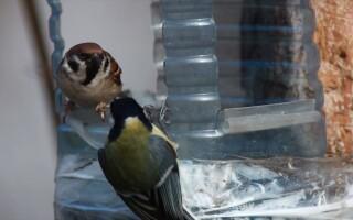 Як зробити годівницю для птахів з пластикової пляшки