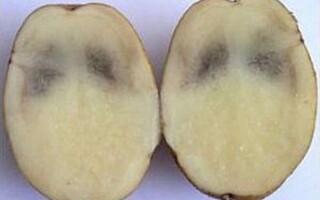 Чому картопля всередині коричневими плямами