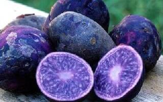 Фіолетовий картопля як готувати