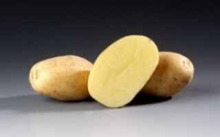 Сантана картопля характеристика