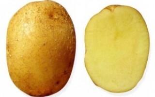 Картопля колобок