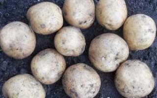 Хімічний склад картоплі вареного