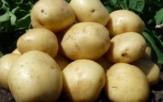 Картопля Нандін