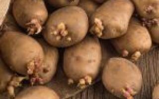 Скільки картоплі потрібно для посадки на 1 сотку