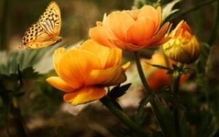 Метелики — цікаві факти