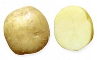 Картопля ласунка