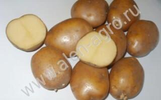Картопля скарб