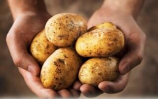 Чи можна їсти картоплю при підвищеному цукрі